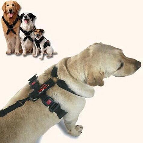 Volvo пропагандирует собачьи ремни безопасности