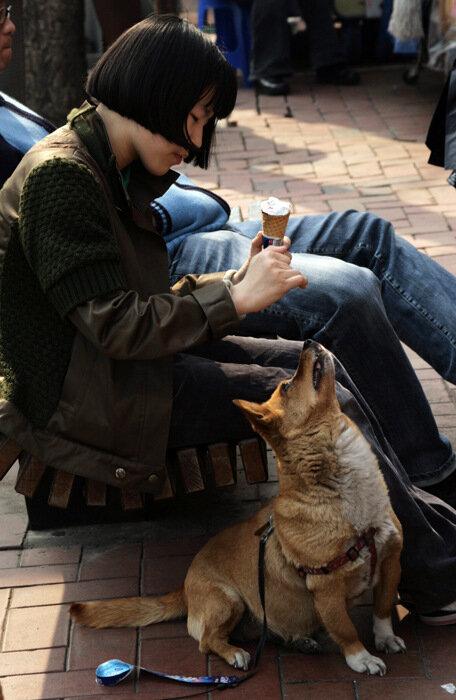 Девочка, мороженое и собака