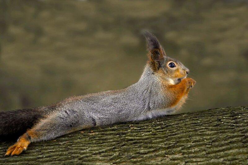 Я на дереве лежу, да орехи все грызу