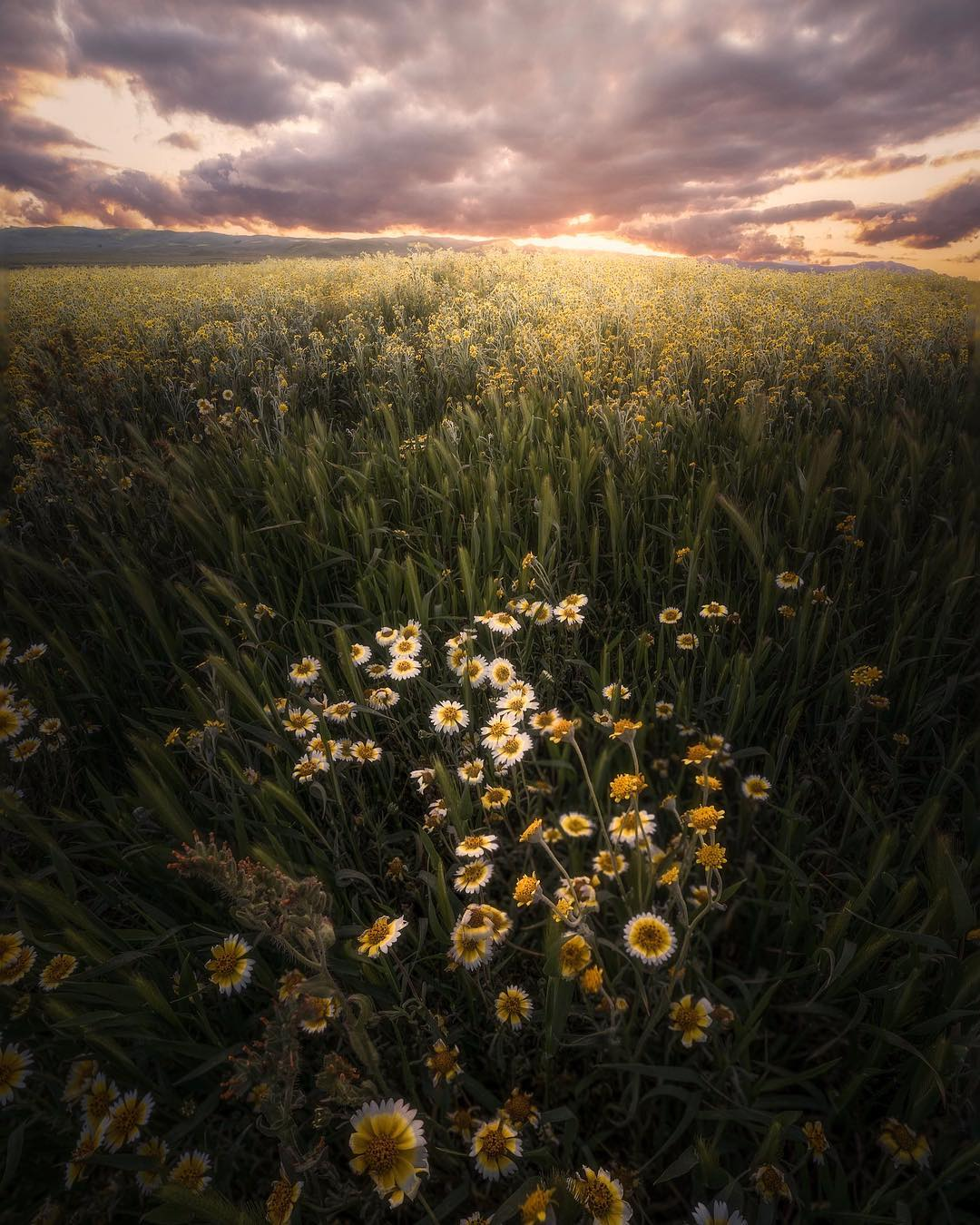 Красивые пейзажи Джесси Моррисона