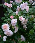Rose-de-Tolbiac-4.jpg