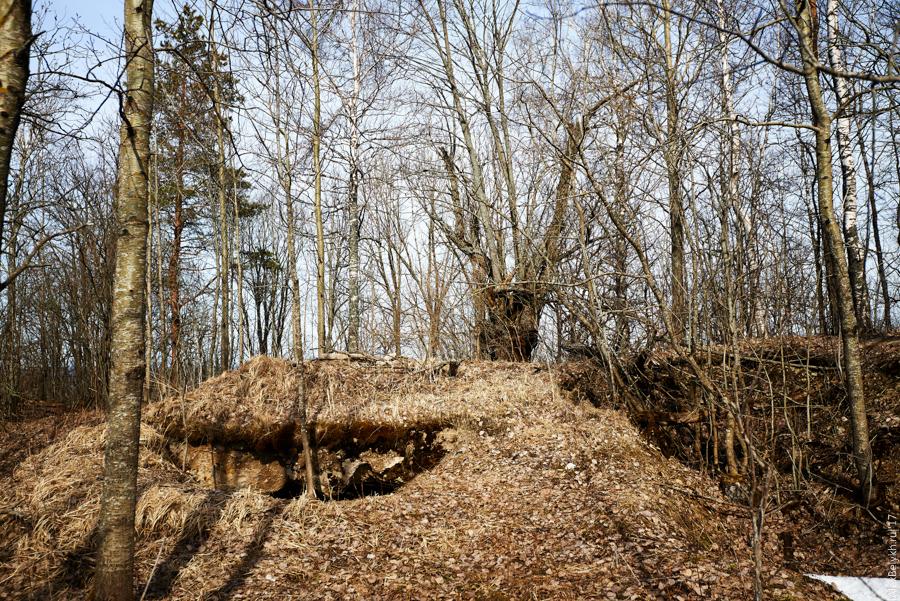 alexbelykh.ru, немецкие ДОТы полумызка Высоцкое, укрепления Высоцкое