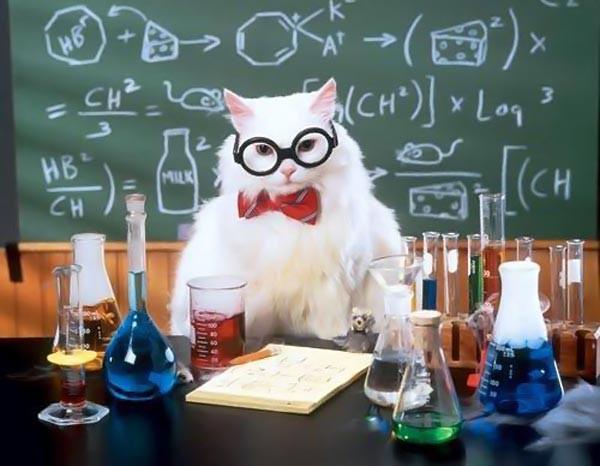 С Днем Химика! Кот химик разрабатывает красители