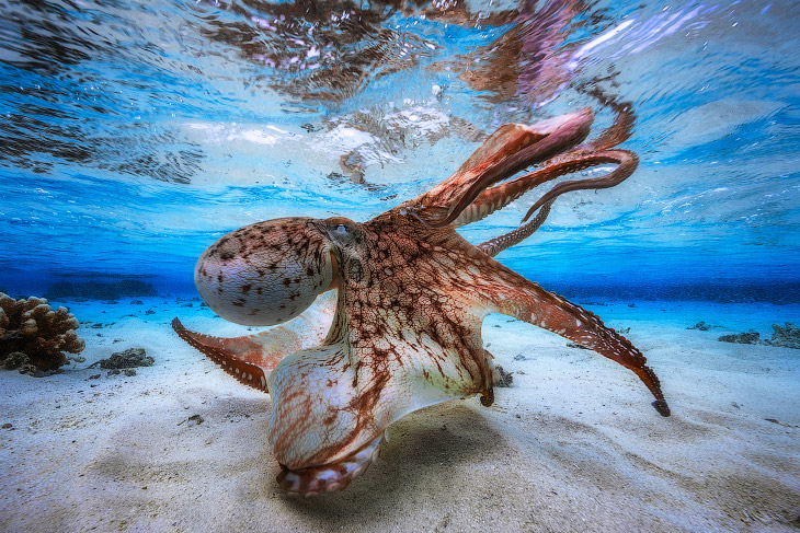 Победители конкурса подводной фотографии 2017 (31 фото)