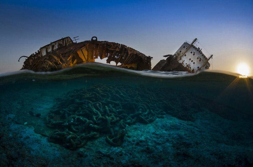 13. Категория «Портеры». Настоящий динозавр. Морская игуана на Галапагосах. (Фото Damien Mauri