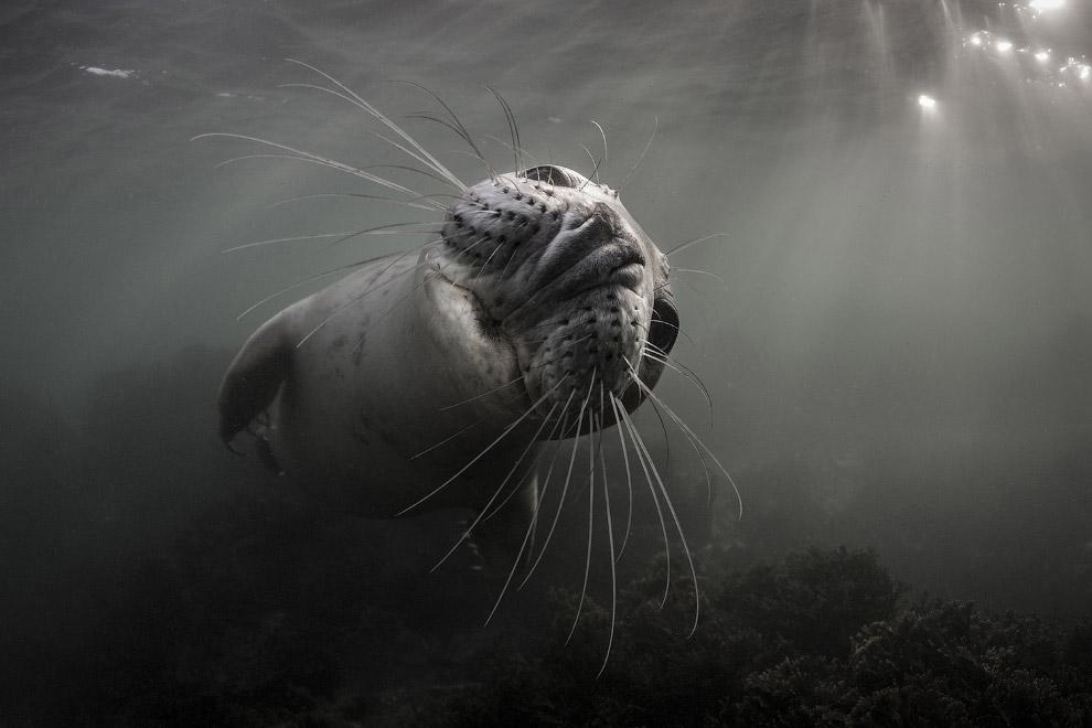 31. Победитель конкурса подводной фотографии 2017. Танцующий осьминог. (Фото Gabriel Barathieu