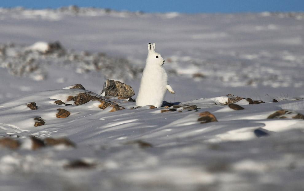 3. Метель на дороге к авиабазе Туле на севере Гренландии. Отсюда мы и полетим. (Фото Mario Tama