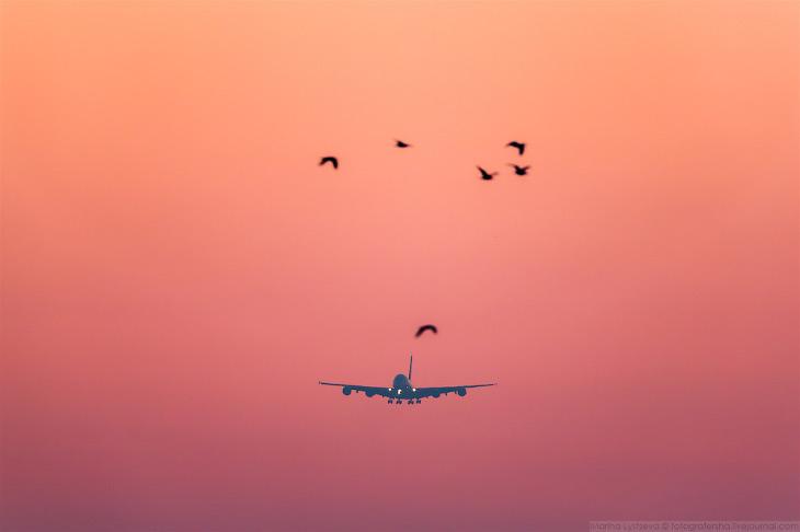 Фотографии и текст Марины Лысцевой   1. На А380 выполняется две тысячи рейсов в неделю из 58
