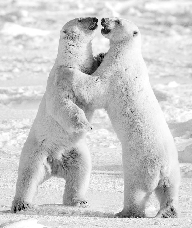 Фотограф говорит, что испытал истинный страх, когда столкнулся лицом к лицу со взрослым бурым медвед