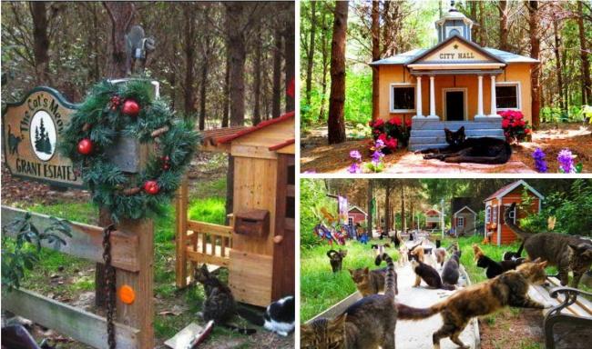 © СaboodleRanch  ВCaboodle Ranch, созданном в2003 году на40гектарах воФлориде Крейгом Гра