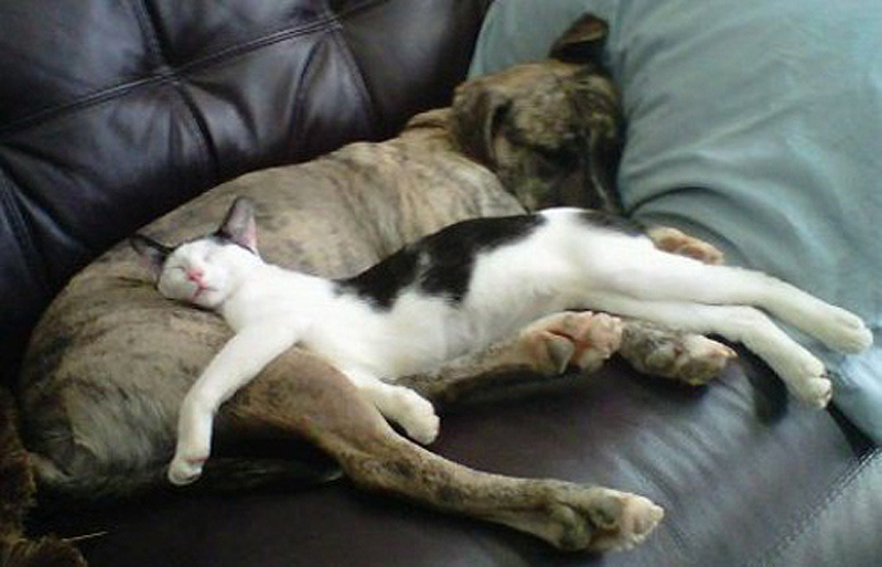 23. Собачья постель.    Не постель для собак, а постель ИЗ собаки. То есть самая удобная постел
