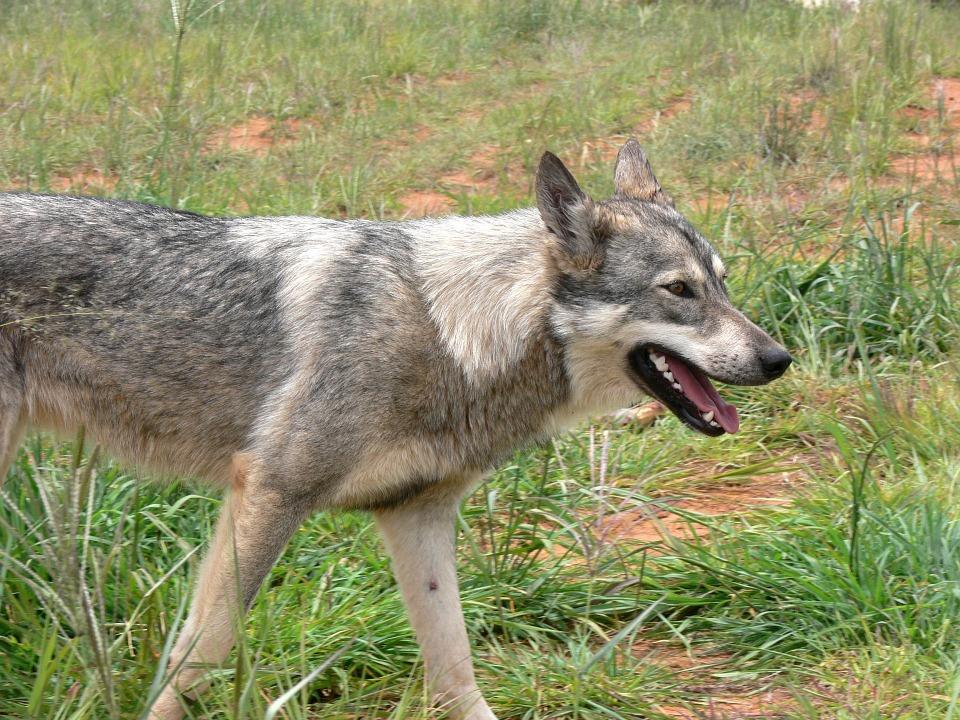 Карантин из-за бешенства домашних собак икошек объявлен в столицеРФ