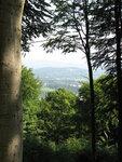 1 лес.JPG