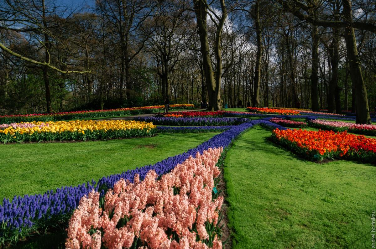 Кёкенхоф в апреле, Нидерланды