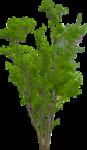 arbre2.png