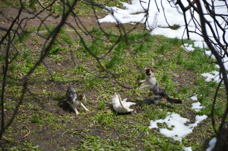 Субботние котики радуются второму приходу весны.