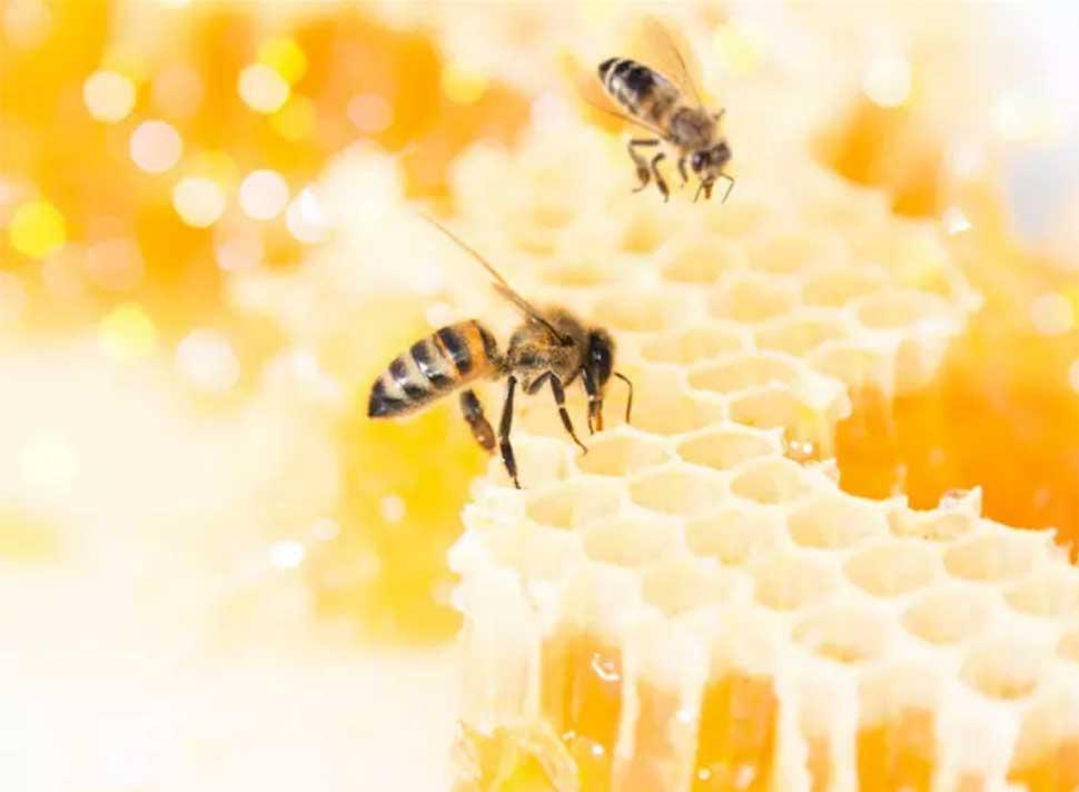 Если бы пчелы получали американскую минимальную оплату труда за свою работу, баночка меда стоила бы