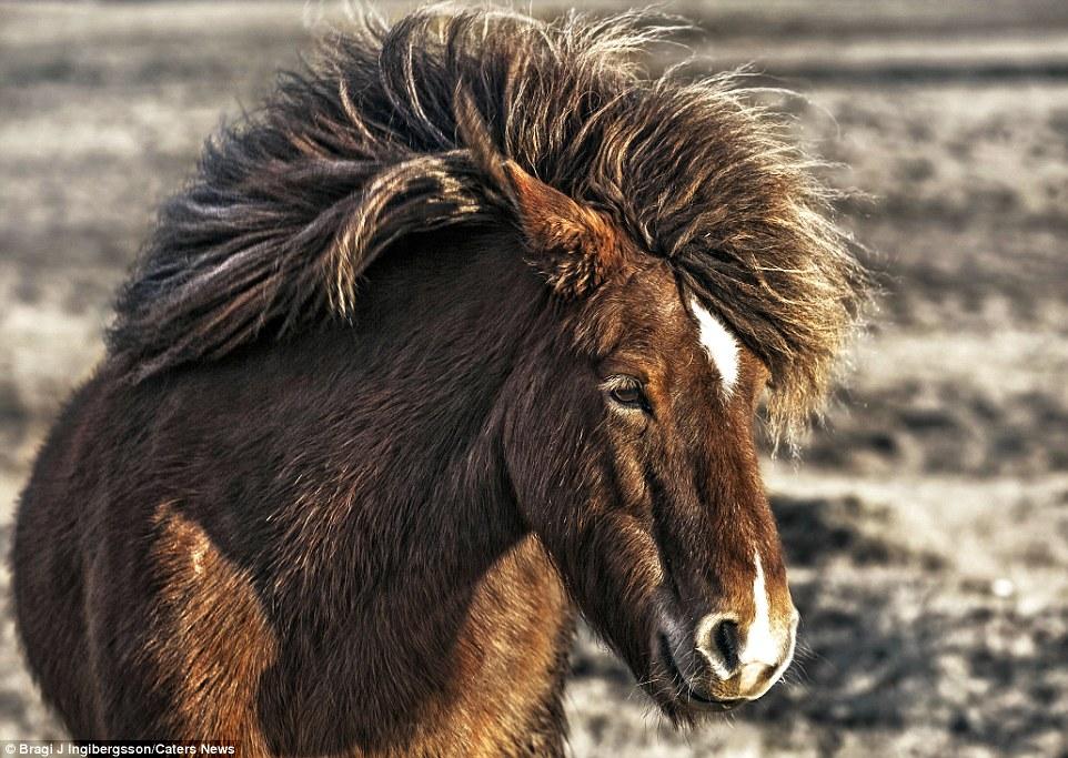 9. Размеры лошадей разные. Самой маленькой лошадью в мире была признана кобыла по кличке Тамбел