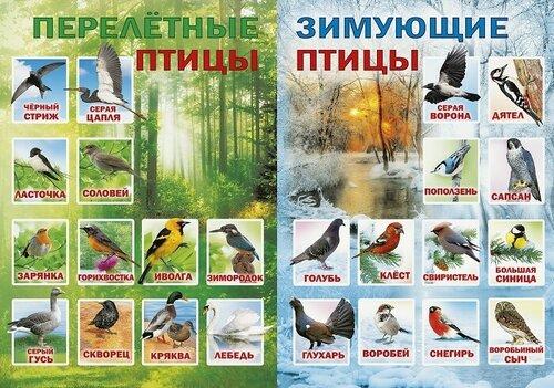 Птицы нашего края