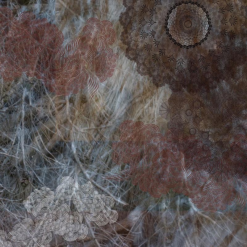 Geometric Natural Patterns by Mami Yamanaka