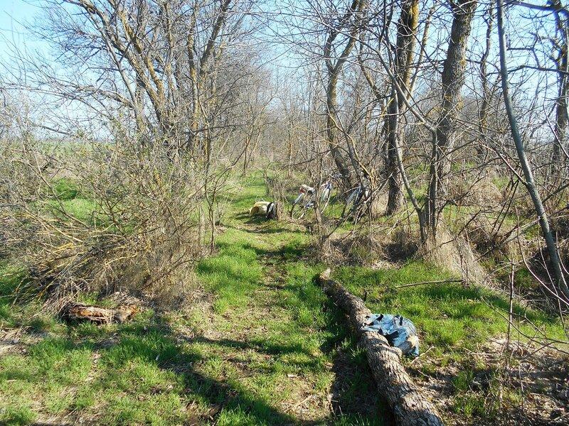 А вот и лес гостеприимный ... DSCN1428.JPG