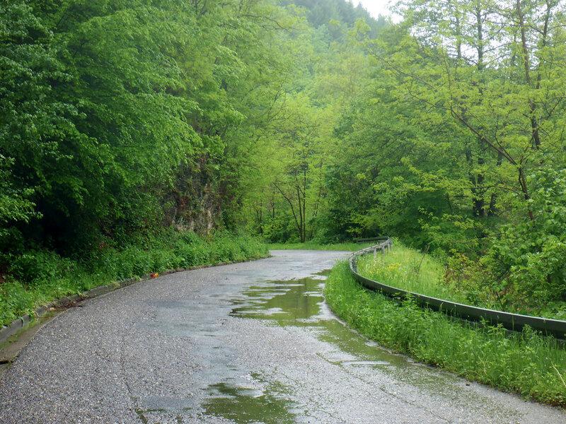 дорога, дождь и зеленая листва
