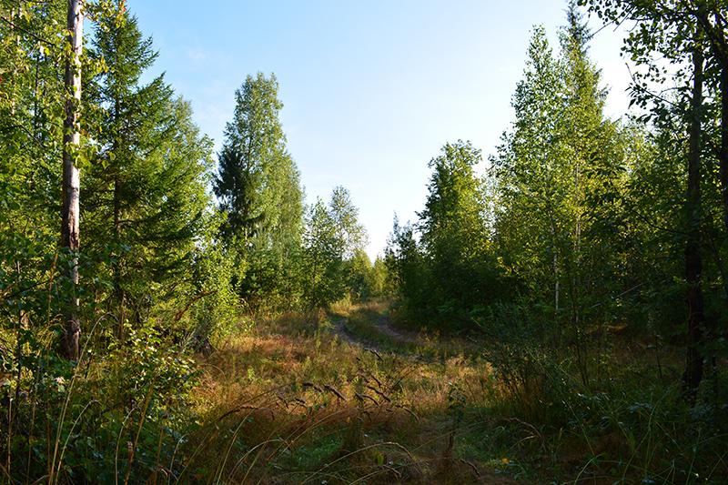 леса 20.jpg