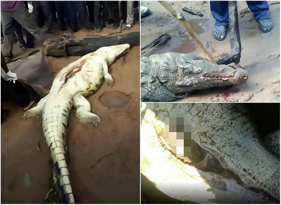 Останки восьмилетнего мальчика нашли в желудке крокодила