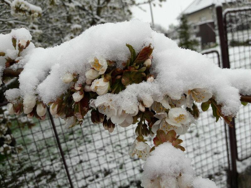 О жизни: Зима вернулась