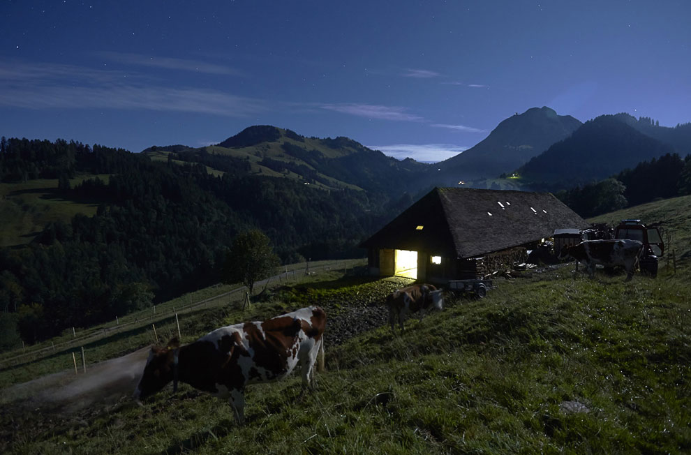Утренняя дойка коров. (Фото Reuters | Denis Balibouse):