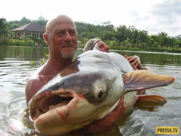 Это фотография мужчины, обнимающего 90-килограммового сома в Таиланде. 9. Огромный сом