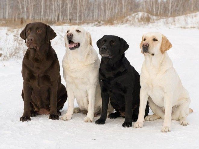 Папильон Такая маленькая, милая и забавная порода собак. Папильоны были и остаются символом элегантн