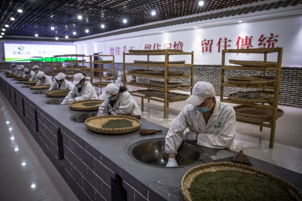 Чайные плантации недалеко от города Цзуньи в провинции Гуйчжоу.