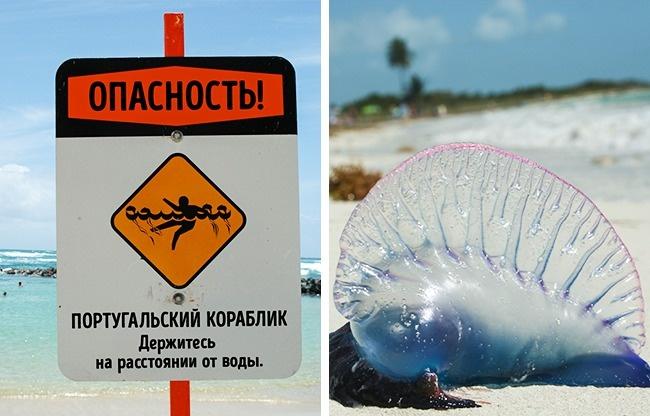 12опасностей, которые могут испортить отдых вэкзотических странах, икак ихизбежать (12 фото)