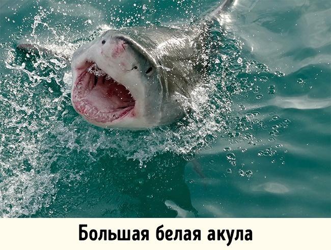 © Bernard DUPONT/flickr  Нападения акул происходят довольно часто— каждый год вмире фиксируе