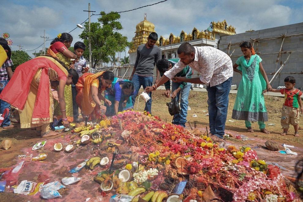 Фестиваль отдает дань уважения животному, которое связано с одним из главных божеств индуизма —