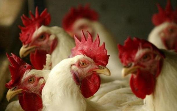 Страны Европы иАзии ограничили экспорт птицы из Украинского государства