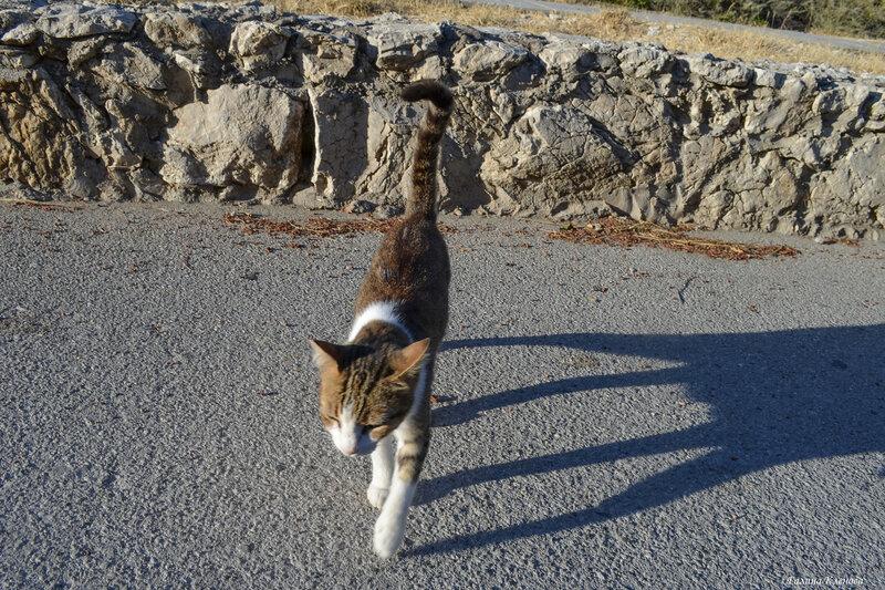 Котейка и её тень