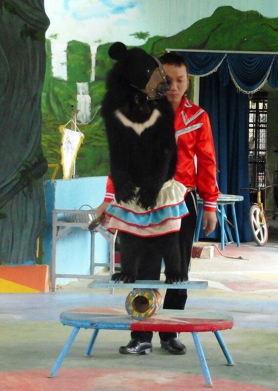Медведь-эквилибрист