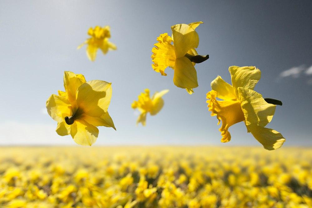 Цветы в невесомости на снимках Клэр Дропперт