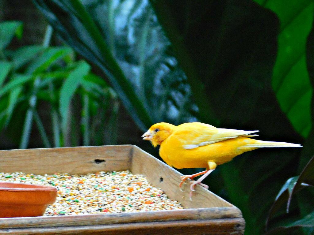 Птицы в ботаническом саду