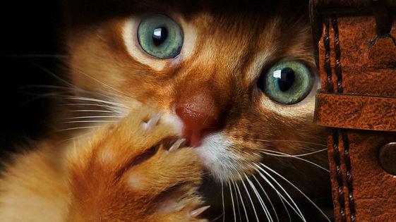 кошки-кошки-40.jpg