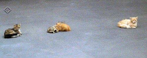 Отдыхающие коты