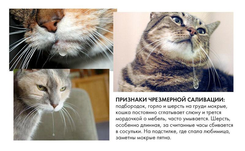 Почему у кошки текут слюни