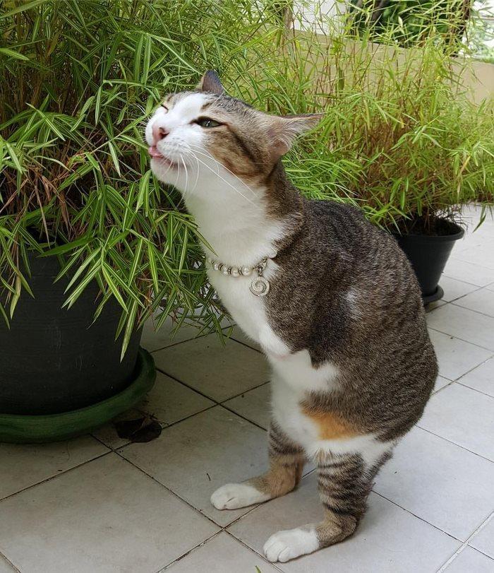 Вы удивитесь, когда увидите, на что способен этот двухлапый кот (7 фото)