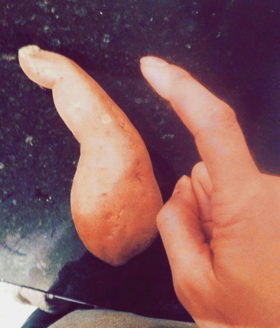 Картофельный перст.