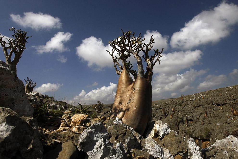 Египетский гриф. Относится к исчезающим видам. (Фото Reuters | Khaled Abdullah):
