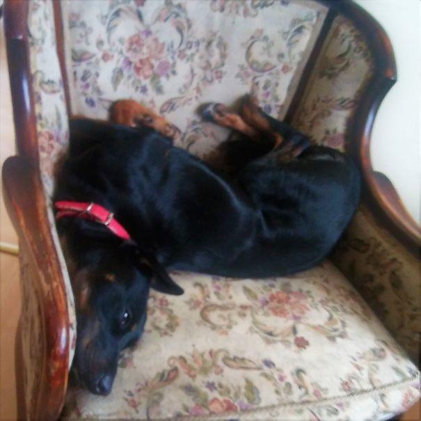 В организме собаки не хватает стеклянной двери!