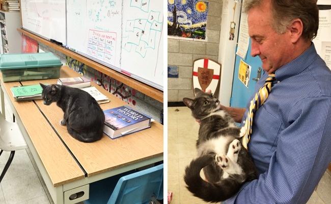 © heart.tumblr.com   Мама отдала щенятам лучшее место для сна.