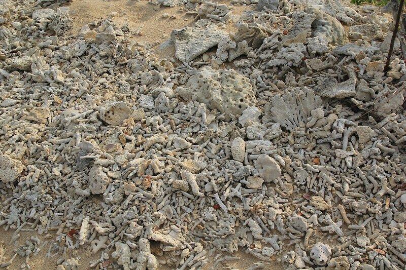 Напоминающие выбеленные кости, кучи обломков мертвых кораллов на песке Кораллового мыса